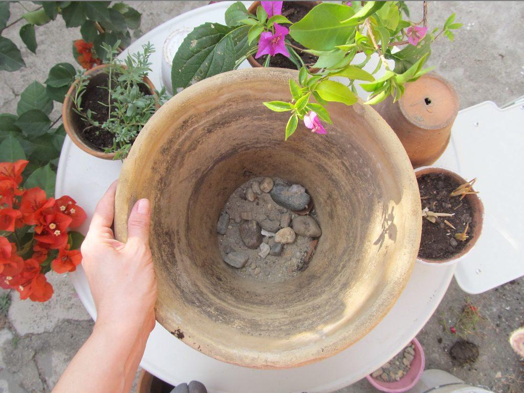 sadnja lukovica u saksije po slojevima
