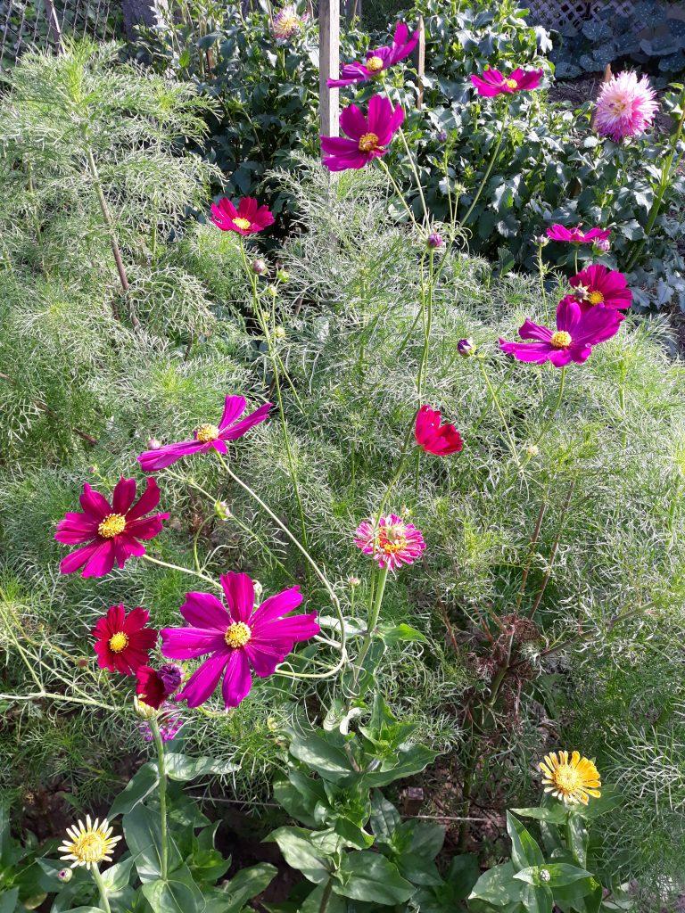 sejanje cveća na otvorenom kosmos