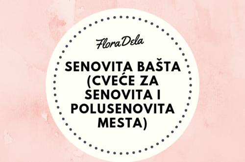 senovita-basta
