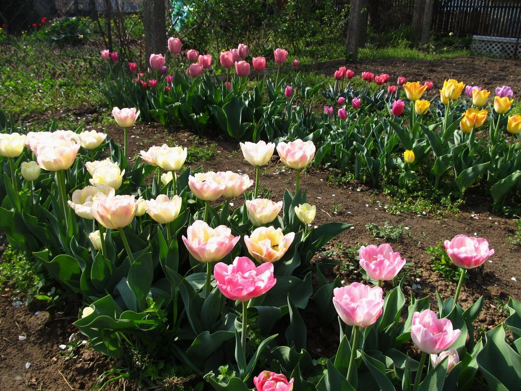 prolećno cveće