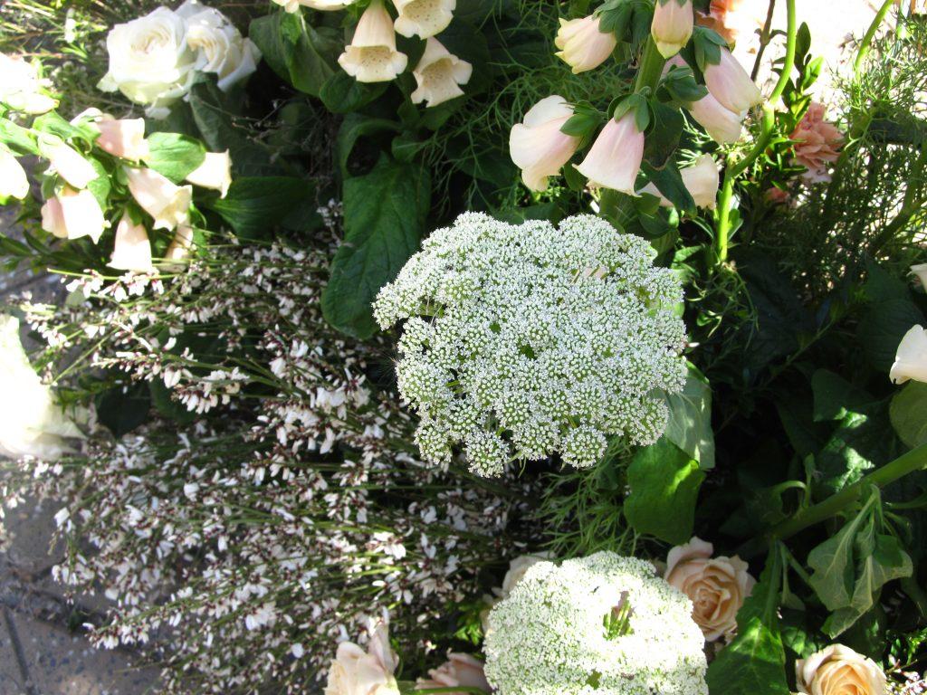 cvetni festival u temisvaru
