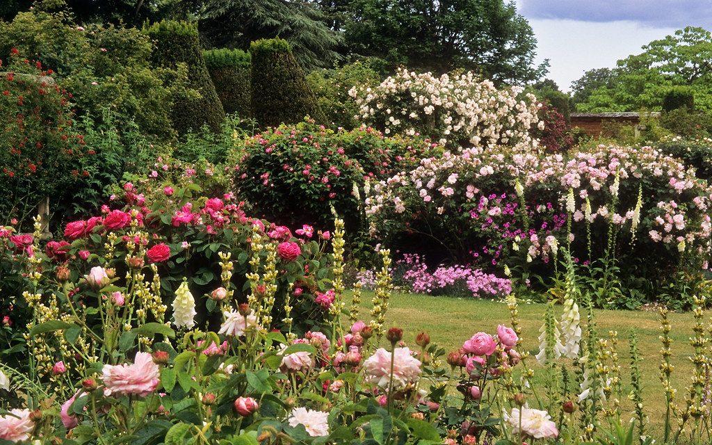 vrt ruža