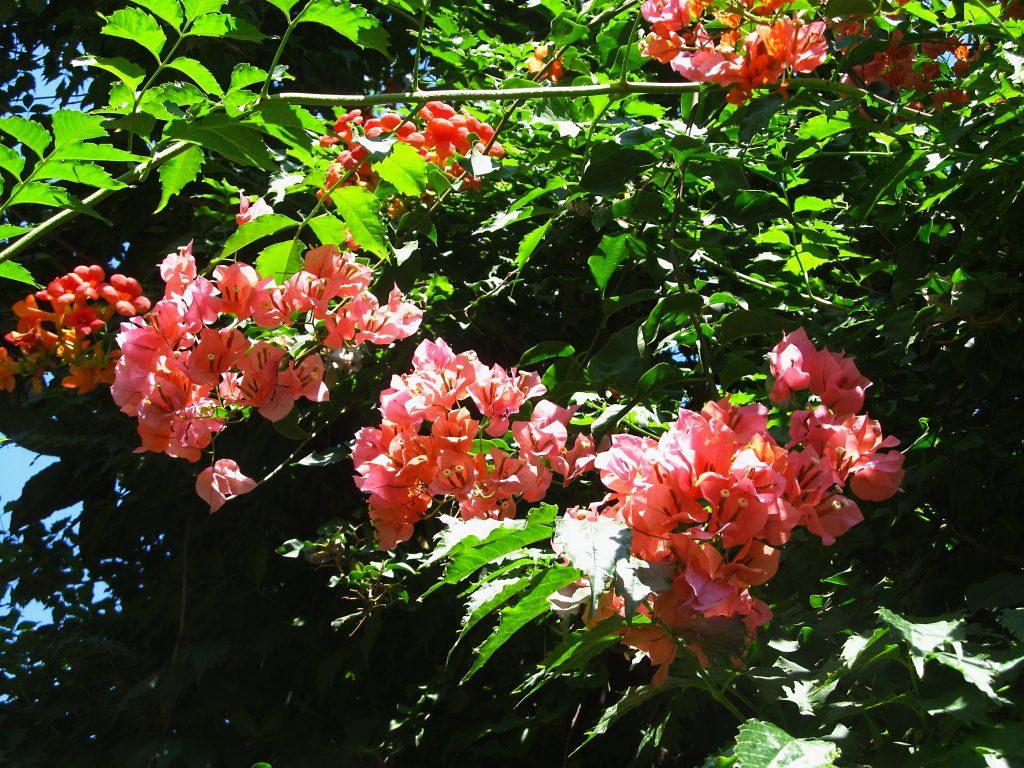 cveće i bašte Sicilije