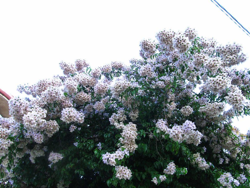 cvece i bašte sicilije