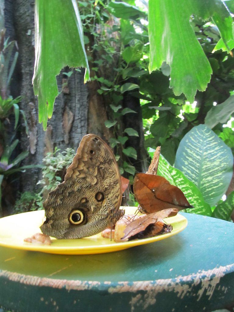 bec-kuca-leptira